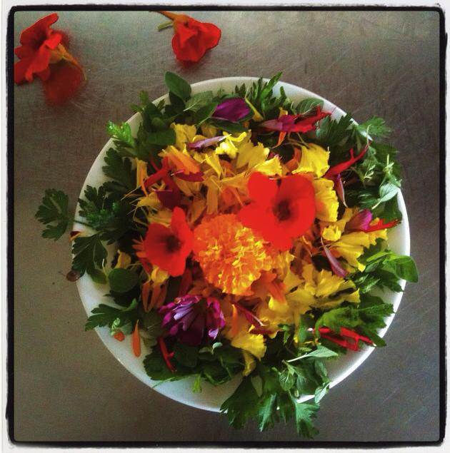 salad - flowering