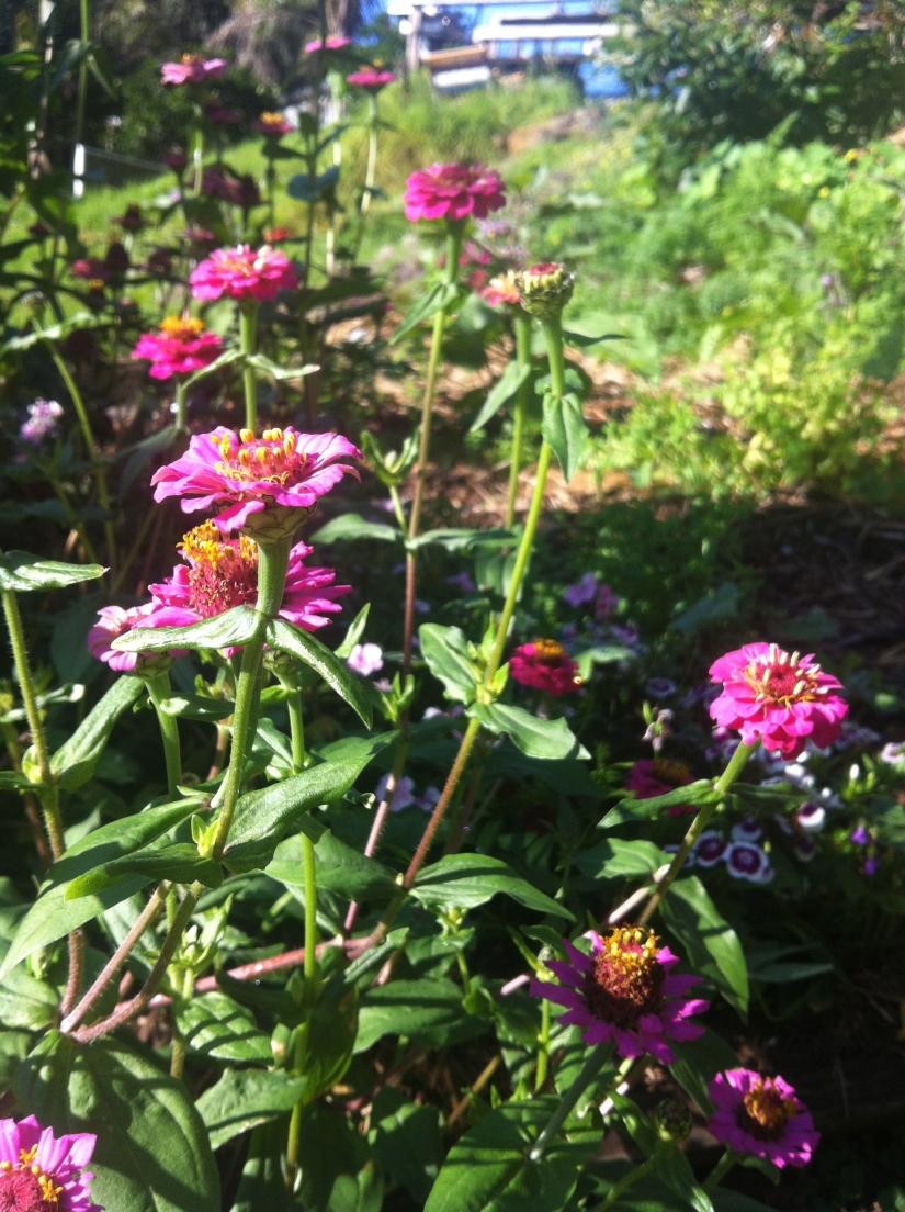 biodiversity in the garden u2013 popes produce