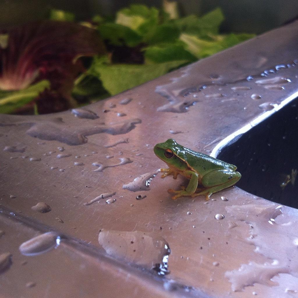 frog & sink.JPG